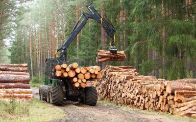 De markt voor hout is volledig overspannen'